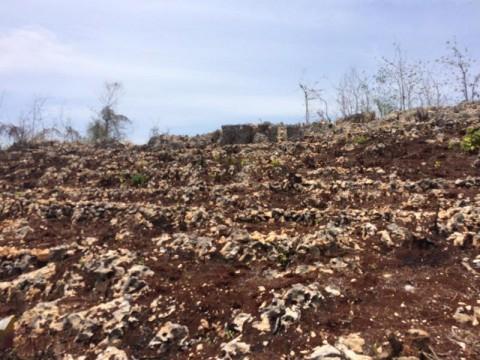 Petani Gunungkidul Merugi karena Hujan Belum Merata