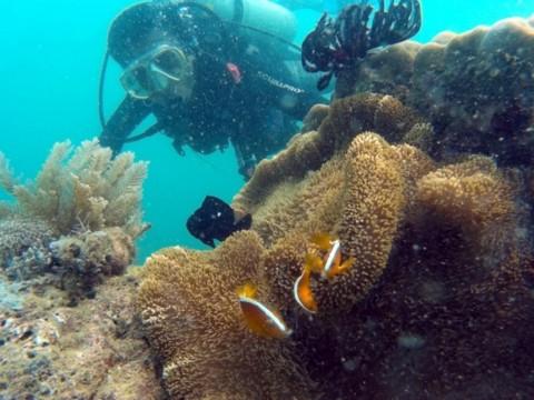 Perbaikan Terumbu Karang Kepulauan Seribu Habiskan Rp5,3 Miliar