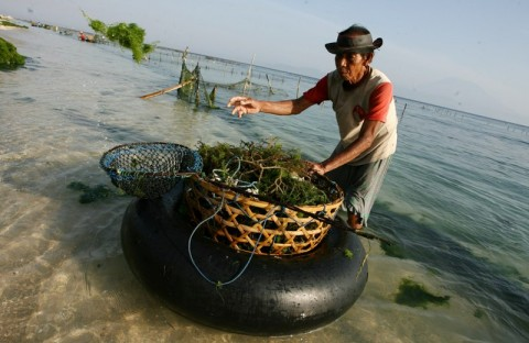 Menteri Edhy Komitmen Dorong Inovasi Produk Rumput Laut