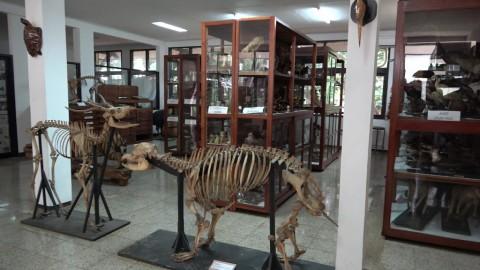 Mengenal Museum Zoologi ITB Jatinangor