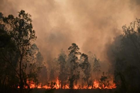 Kebakaran Hutan, Australia Keluarkan Peringatan Perjalanan