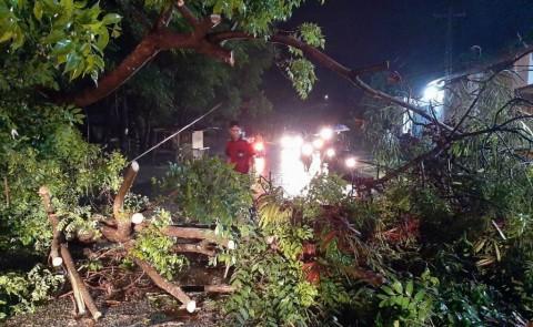 Pepohonan Timpa Rumah dan Kendaraan di Jepara