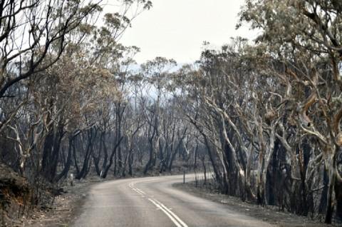 Korban Tewas Kebakaran Hutan Australia Jadi 9 Orang