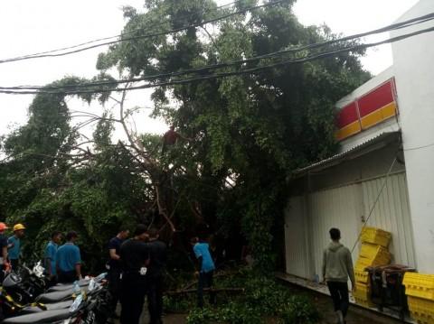 Pohon Tumbang Menutup Akses Stasiun Serpong Tangerang