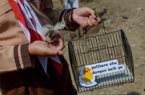 Program Anak Ayam Diklaim Berhasil Cegah Kecanduan Gawai