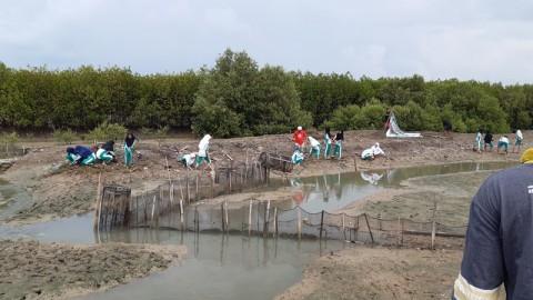 Abrasi Laut di Jepara Tiap Tahun Mencapai 100 Meter