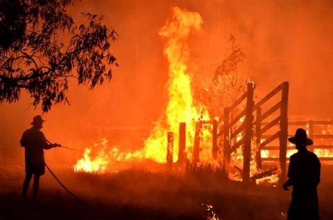 Relawan Kebakaran Hutan Australia akan Dibayar Rp58 Juta