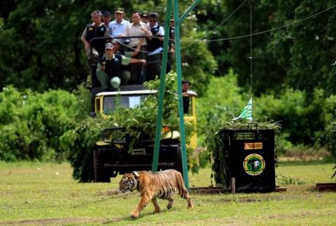 Tomy Winata Kecam Pernyataan Juarsah Soal Perburuan Harimau
