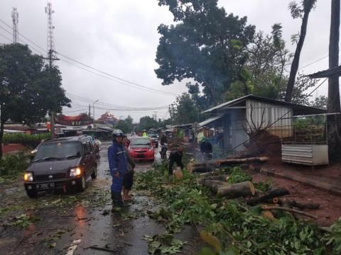 Pohon Tumbang Tutup Jalan Antarkabupaten