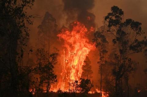 Kebakaran Hutan Australia Ciptakan Tornado Api Berbahaya