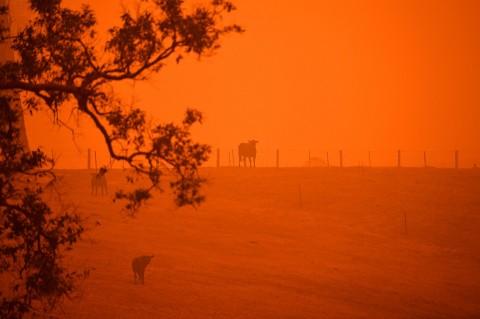 Potret Langit Australia yang Memerah Akibat Karhutla