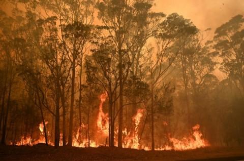 Kebakaran Hutan Australia Hanguskan Tiga Rumah WNI
