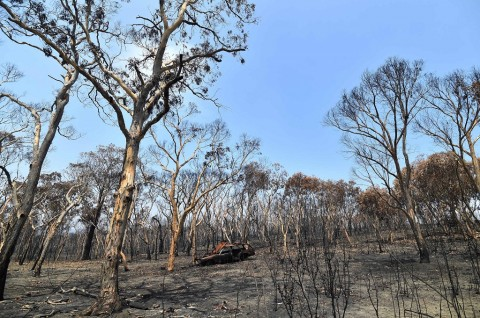 Hujan Ringankan Beban Petugas Kebakaran Hutan di Australia