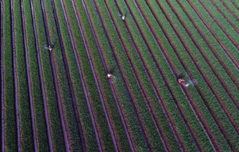 60 Ribu Ha Lahan Pertanian Hilang Setiap Tahun
