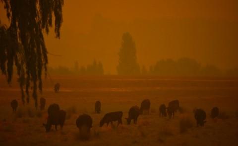 Australia Bagi-bagi Wortel untuk Hewan Korban Kebakaran
