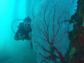 Wisata Bawah Laut Pulau Abang Mulai Dilirik Wisatawan