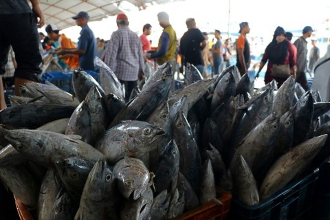 Ikan Sidat Indonesia Laku di Jepang