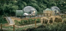 Penginapan Unik di Penampungan Gajah