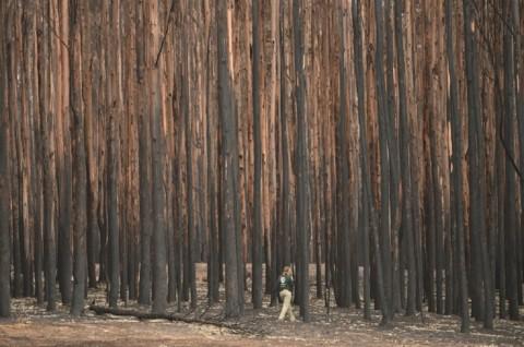 Hujan Badai Guyur Area Kebakaran Hutan di Australia
