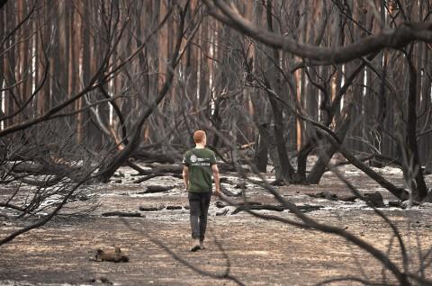 Kebakaran Australia Rusak Habitat Spesies Terancam Punah