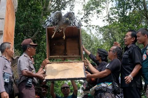 BKSDA Lepasliarkan Satwa Sitaan di Tabanan