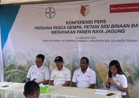 Para Petani Sigi, Sulawesi Tengah Beralih Jadi Menanam Jagung