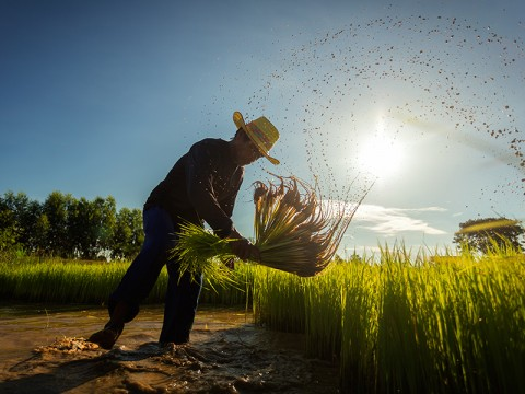 Mentan Siapkan Rp1 Triliun KUR untuk Petani di Sulsel