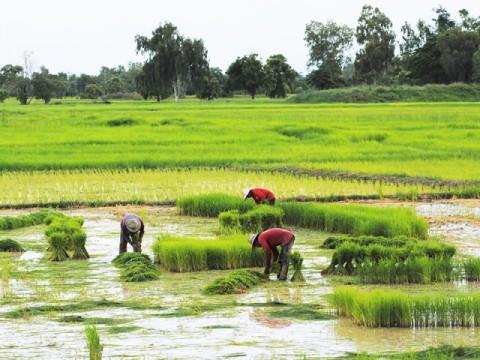 Mentan Dorong Petani di Sulsel Gunakan Asuransi