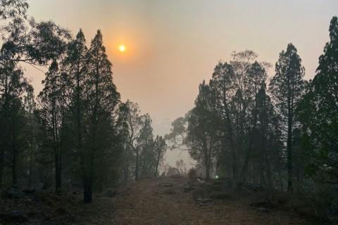 Kebakaran Australia, Status Darurat Diberlakukan untuk Canberra