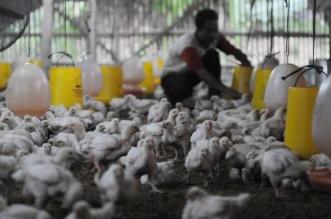 Pemerintah Waspadai Potensi Penyebaran Flu Burung