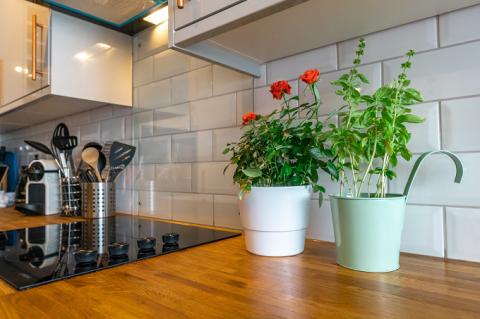 10 Tanaman Hias untuk Mempercantik Dapur