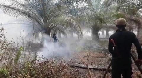 Lahan Gambut Kebun Kelapa Sawit di Siak Terbakar