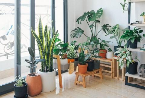 5 Tanaman Hias Terrarium Cantik dalam Ruangan