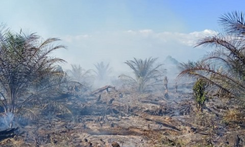 Api Hanguskan 4 Hektare Lahan di Aceh Singkil