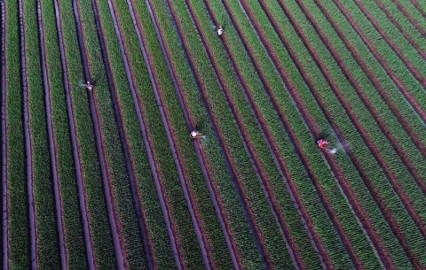 Usaha Pertanian Dinilai Menjanjikan bagi Milenial