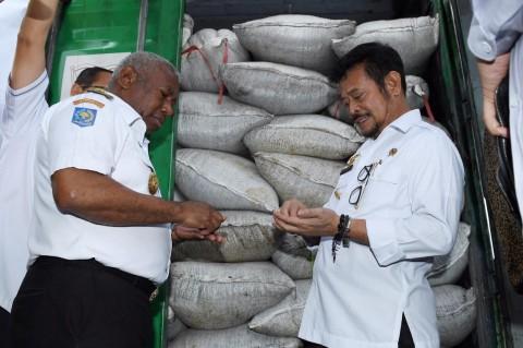 Mentan Syahrul Lepas Penjualan Buah Merah Papua ke Cekoslowakia