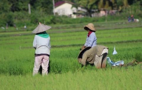 Kementan: 90% Petani Memasuki Fase Kurang Produktif