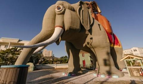 Sensasi Menginap di 'Perut Gajah'