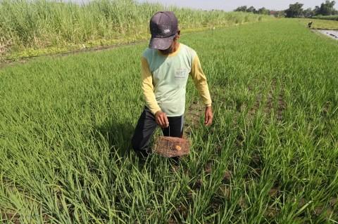 Ombudsman: Masalah Agraria Masih Jadi Problem Sistemik