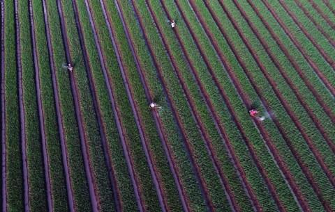 Sektor Pertanian Jadi Bantalan Hadapi Virus Korona