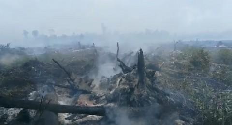 30 Hektare Lahan Gambut di Aceh Jaya Terbakar