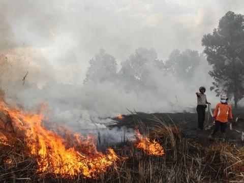 328.457 Hektare Lahan di Sumsel Terbakar Selama 2019