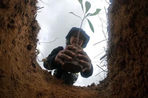 Pulihkan Kawasan Bekas Karhutla, Seribu Pohon Ditanam