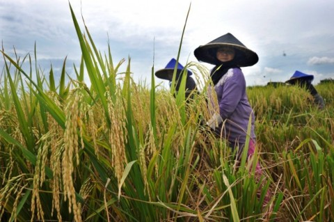 Pengalih Fungsi Lahan Pertanian Dinilai Bisa Dipenjarakan