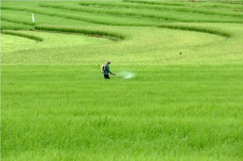 BPS Sebut Ekspor Pertanian Naik pada Februari 2020