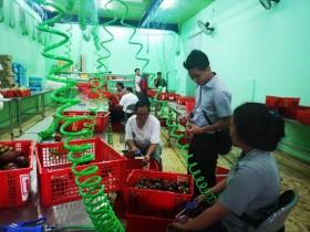 Duta Petani Milenial Siap Pasarkan Kebutuhan Pangan Secara <i>Online</i>