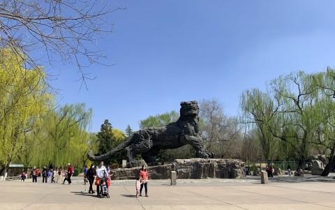 Setelah 58 Hari Tutup, Kebun Binatang Beijing Beroperasi