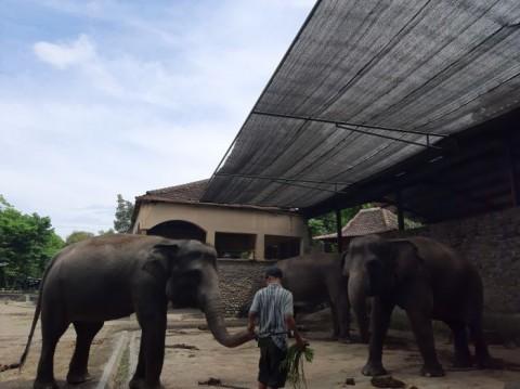Petugas Kebun Binatang di DIY Hanya Terima 40% Gaji