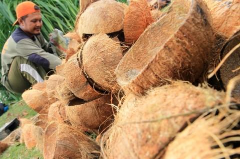 Kementan Fokus Genjot Ekspor Coconut Charcoal