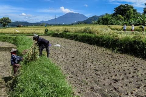 Jumlah Petani Milenial Berpeluang Tumbuh